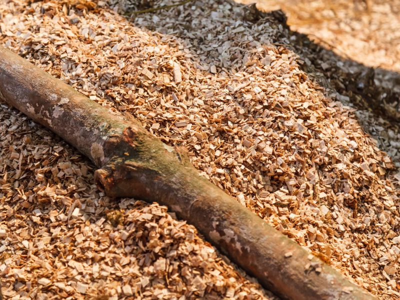 Ground Shredded Chipped Wood chips used as biomass solid fuel, raw material for producing wood pulp, organic mulch in gardening, landscaping and substrate for mushroom cultivation. Natural Background